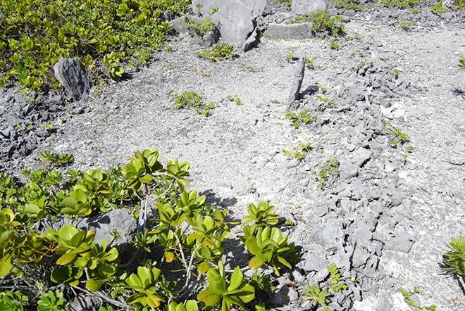 Marae du motu Topikite à Kauehi