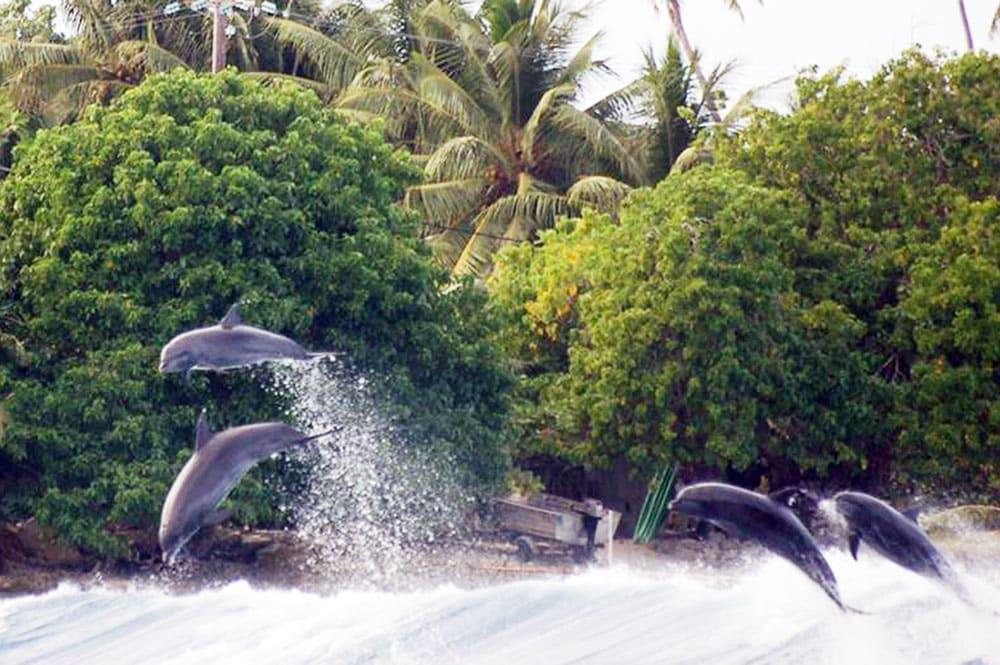 Dauphins dans la passe Hiria de Tiputa, Rangiroa. Photo Salamander