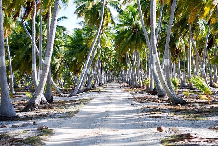 Chemin au travers de la cocoteraie de Fakahina