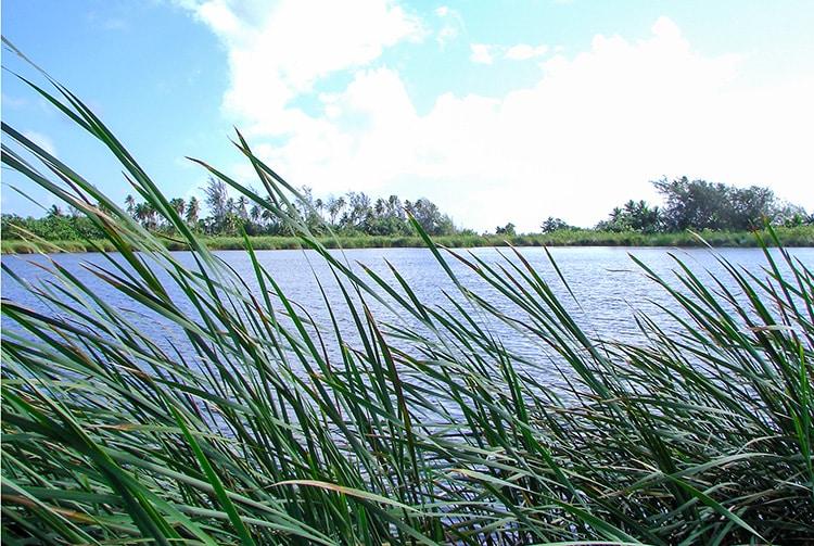 Lac Faunua de Maeva, Huahine