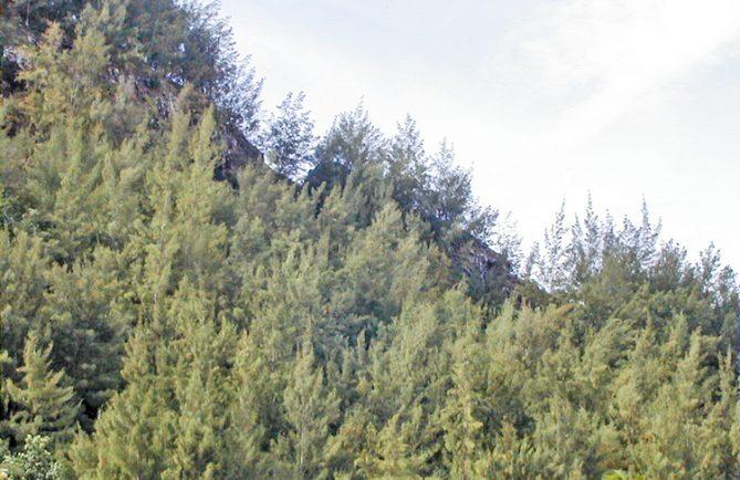 Précipice des suicidés, à Mangareva