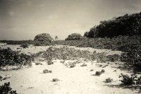 Atoll de Maria aux Iles Australes en 1934. mangarevan expédition