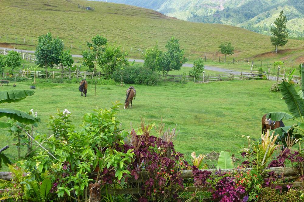 Ranch du Plateau de Toovii à Nuku Hiva