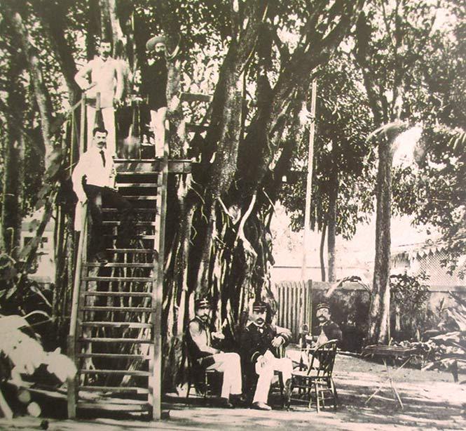 Banian de Gauguin, palce Tarahoi à Papeete