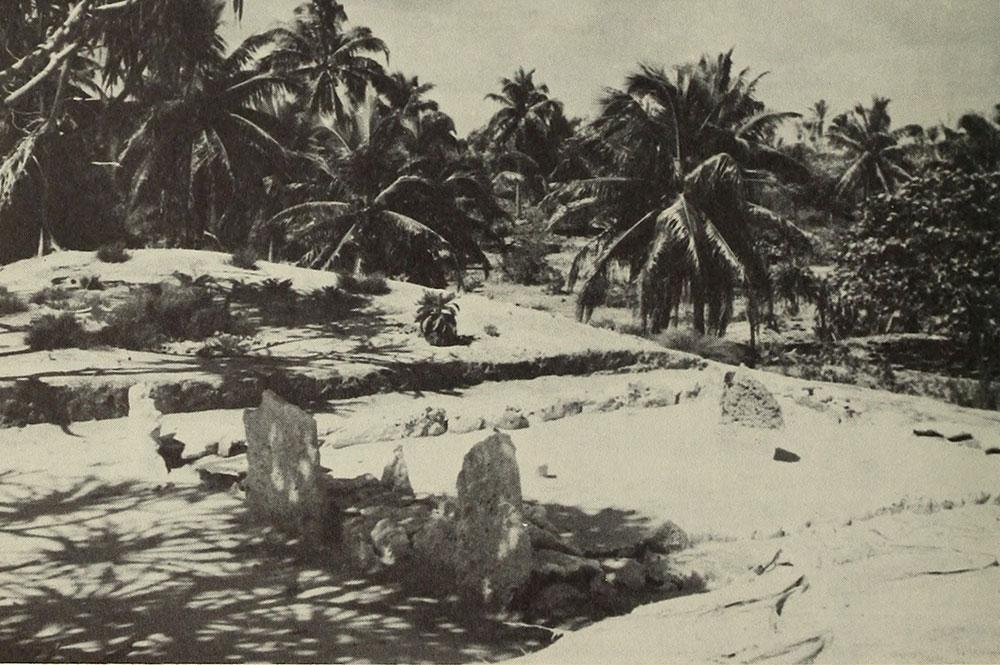 Le marae Maherehonae de Rangiroa en 1951