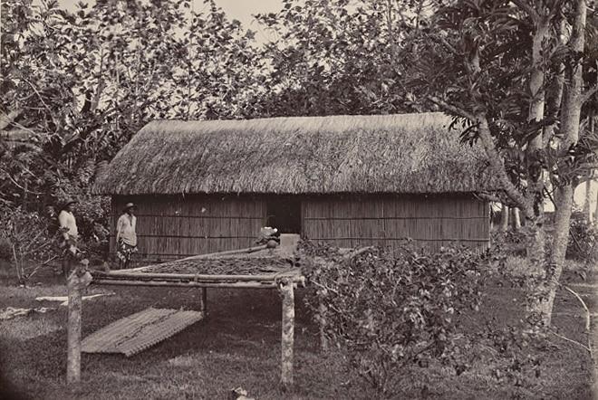 Séchage de la vanille de Tahiti en 1900. Coll. Franom