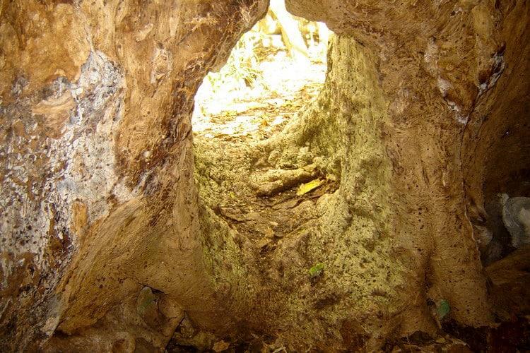 Intérieur de l'arbre-grotte de Tubuai