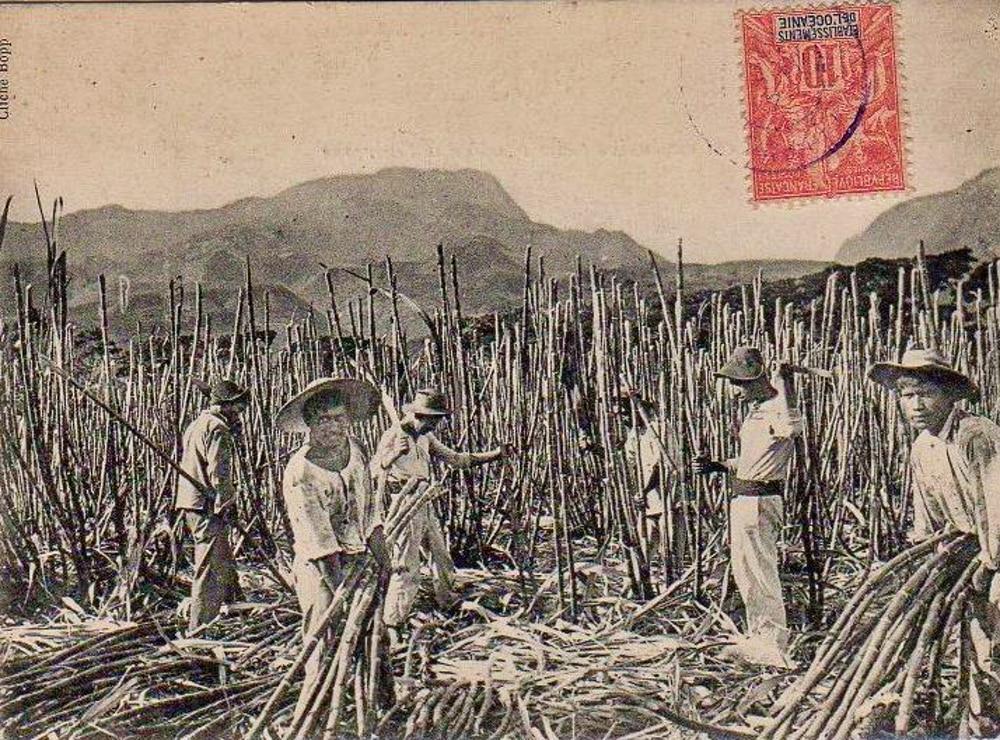 Coupe de canne à sucre à Pirae, vers 1900. Photo Bobb