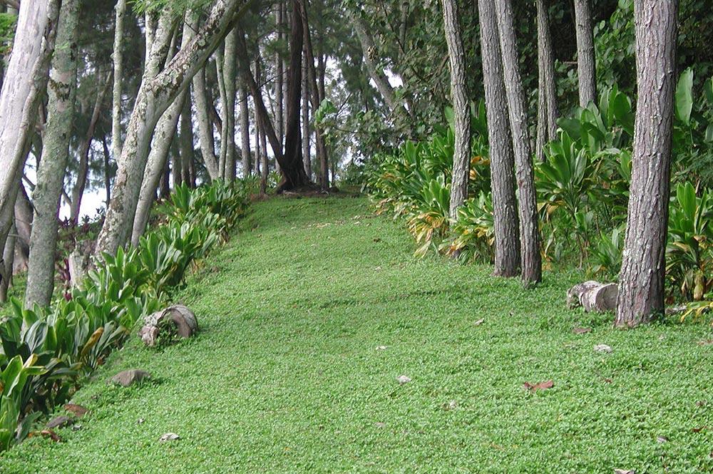 Chemin des soeurs à Rouru, Mangareva © Tahiti Heritage