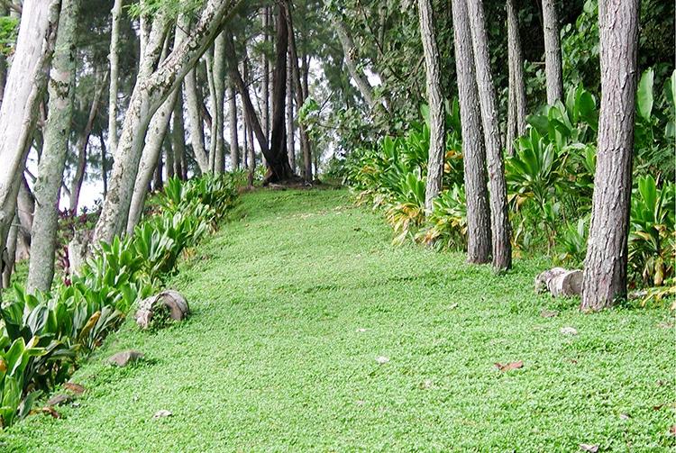 Chemin des soeurs © Tahiti Heritage