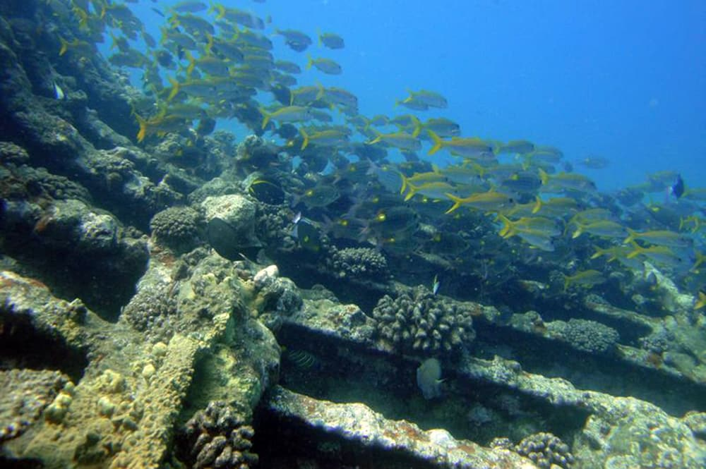 Epave de la Zélée à Papeete. Photo Venustars