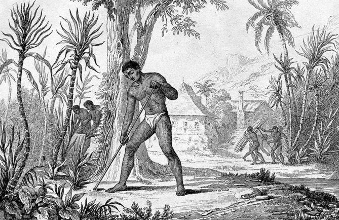 Plantation de canne à sucre à Pirae en 1892