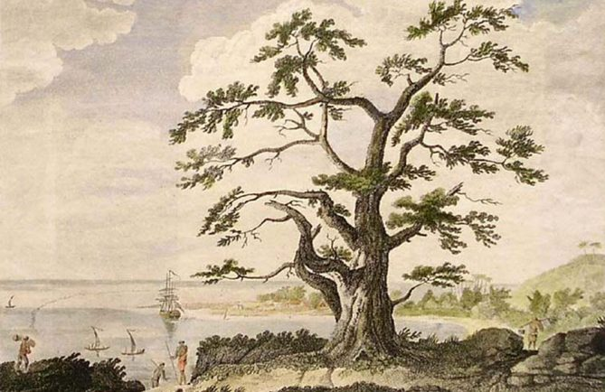OnA view of Matavia Bay in Otaheite from One Tree Hill. Hand-coloured engraving after a drawing originally by Sydney Parkinson in John Hawkesworth Account of the voyages..for making discoveries in the Southern Hemisphere vol. II, 1773.