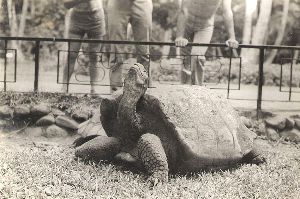Tortue du jardin botanique de Tahiti en 1970
