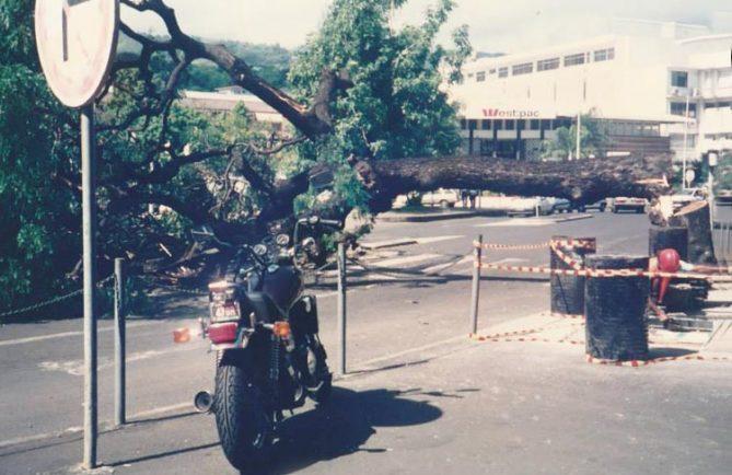 Arbre de la cathédrale abattu par les grévistes en avril 1994. Photo Christian Beslu