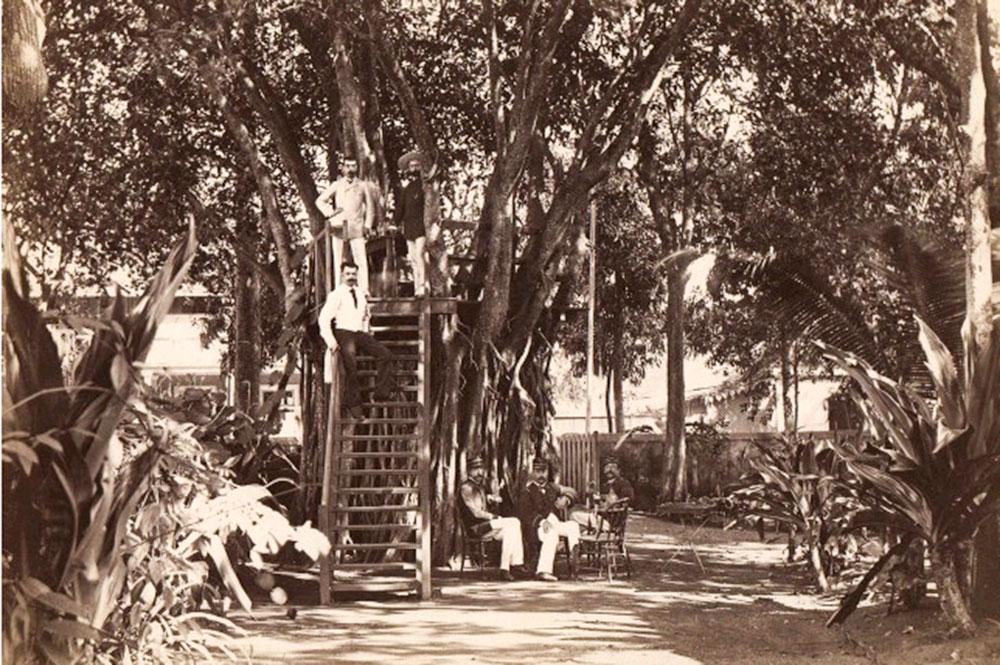 Banian de Gauguin, place Tarahoi à Papeete en 1890