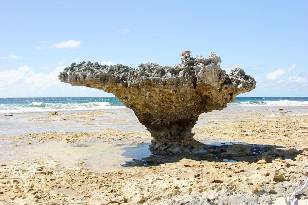 Ofai Taunoa, Rocher des tortues de Mataiva.