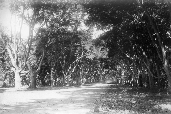 Avenue de la Fataua à Papeete en 1887. Photo George Valentine