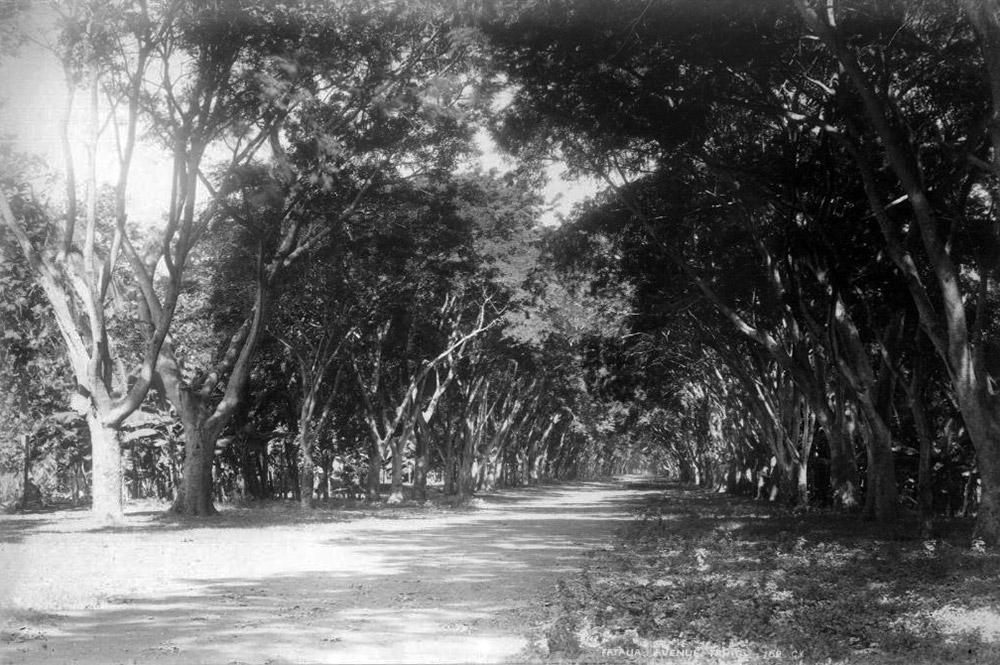 L'avenue de la Fautaua à Papeete en 1887. Photo F. Holmes
