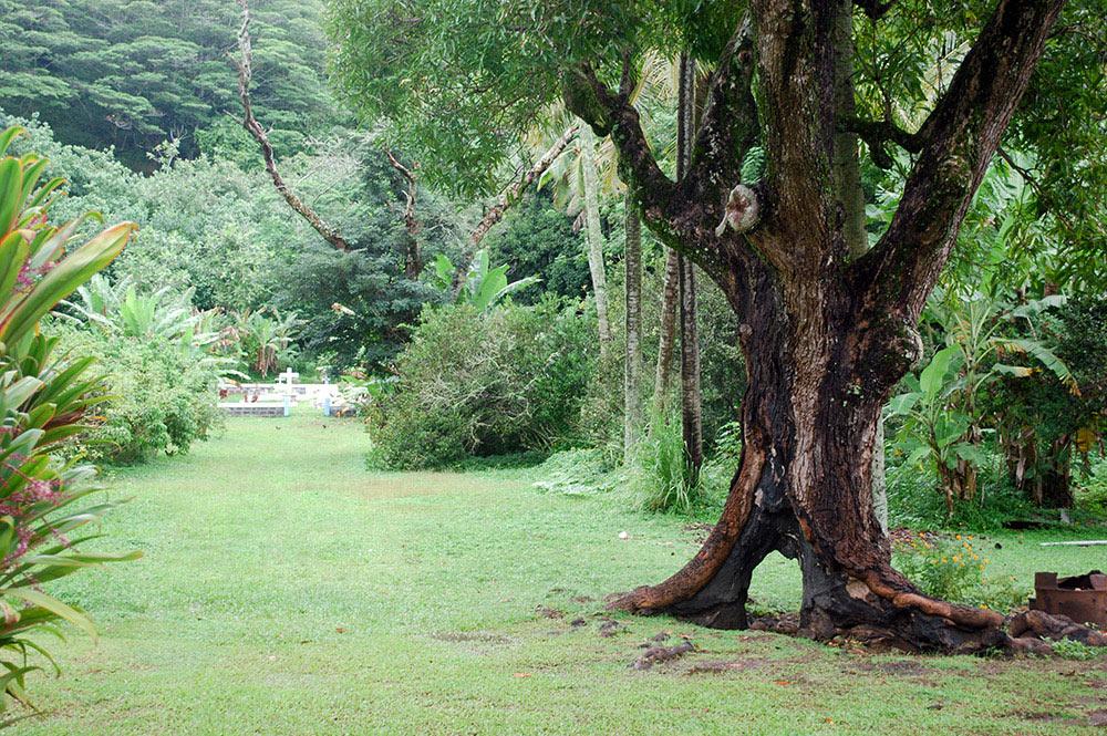 Allée du cimetière de Taku, Mangareva. © Tahiti Heritage