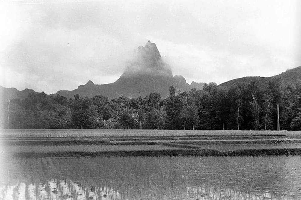 Paysage de rizières à Opunohu, Moorea en 1932 Photo : Roger Parry Musée Branly Paris
