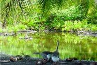 Source Oro vai à Papara. © Tahiti Heritage