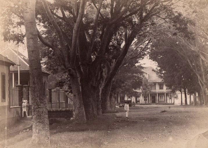 Papeete, l'avenue Bruat vers 1900