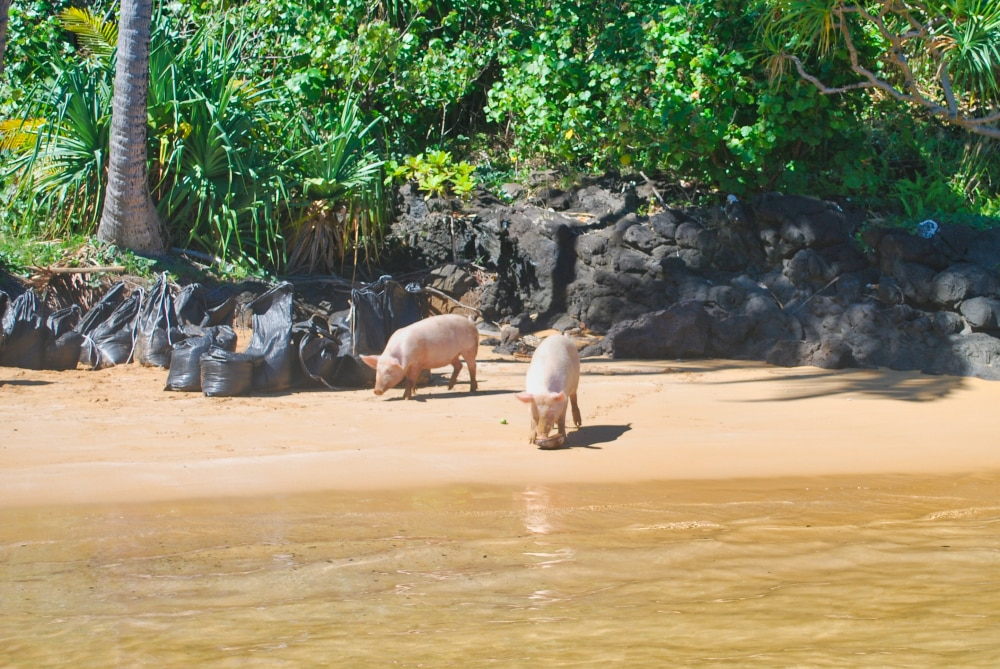 Extraction de sable rose sur la plage Onemea à Taravai, 2012 © Tahiti Heritage