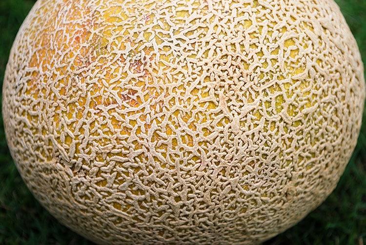 Peau de melon brodé de Tahiti