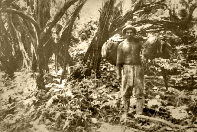 Grotte Anapiro de la vallée de Papenoo. Coll. Raymond Tuhio