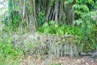 Le marae Mataoa i Tahiti de Papara en 2002 © Tahiti Heritage