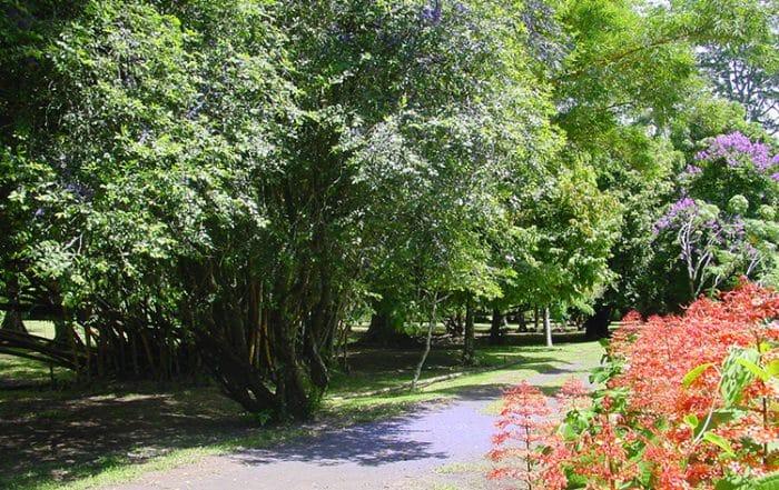 Parcours du jardin botanique de tahiti tahiti heritage for Boulevard du jardin botanique 20