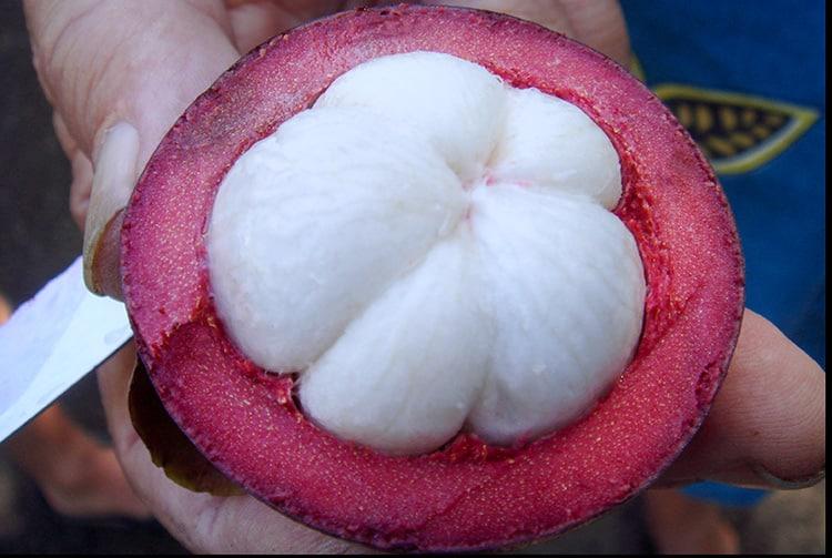 Mangoustan de Tahiti , Garcinia mangostana.