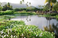 Source Vai uriri à Mataiea. © Tahiti Heritage