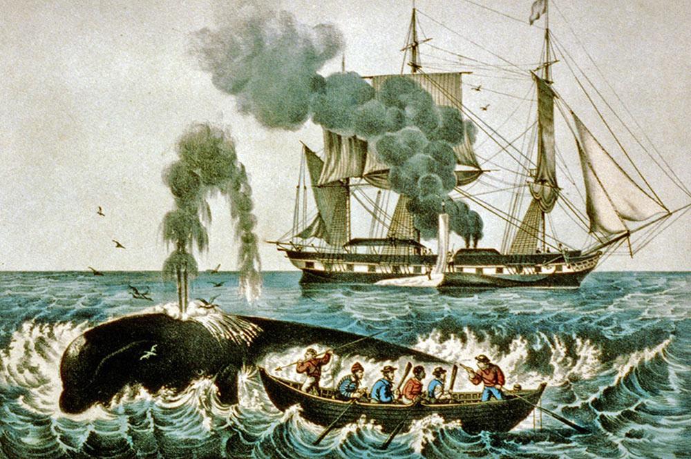 Scène de chasse à la baleine au XIXè siècle