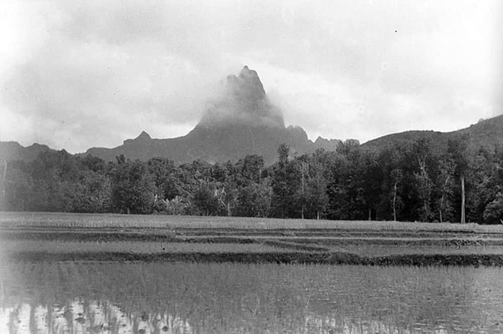 Rizières à Opunohu, Moorea, en 1932.. Photo Roger Parry