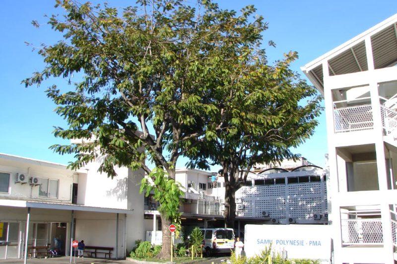 Parkia du centre hospitalier de Mamao en 2006