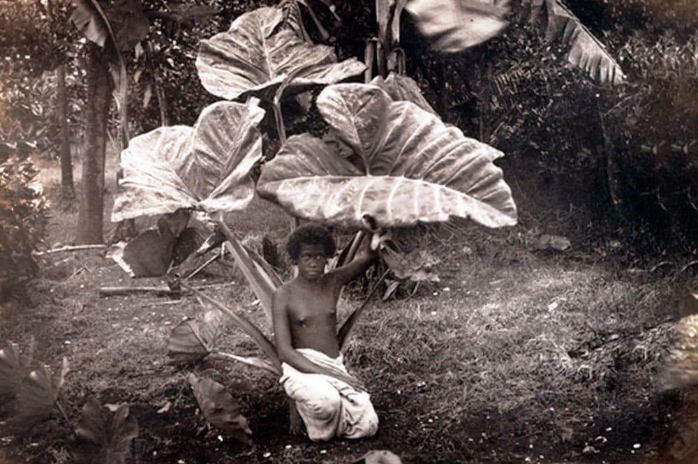 A l'abri de la pluie sous les feuilles de taro. 1887