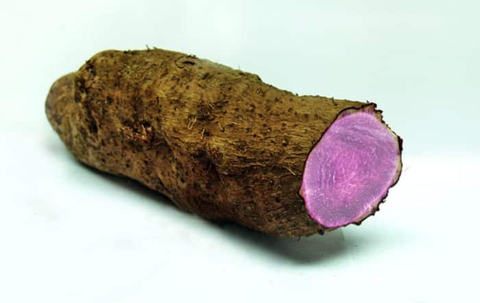 Igname pourpre, Ufi violet, Dioscorea alata.