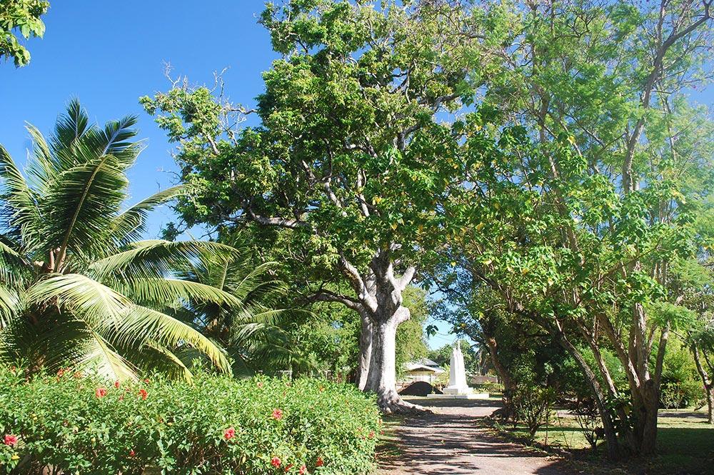 Noyers de l'évêché de Tahiti en 2006 © Tahiti Heritage