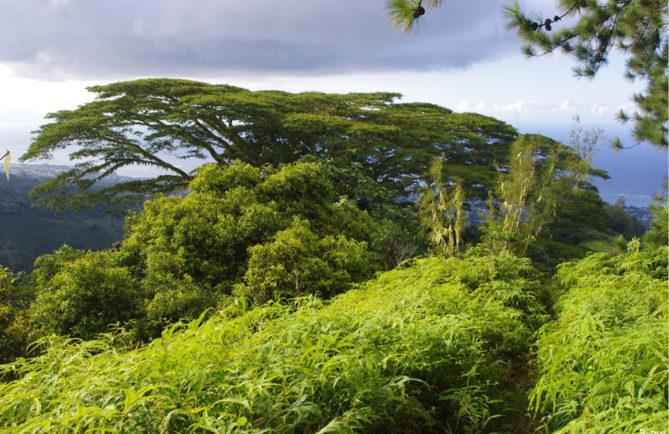 Falcata du chemin de l'Aorai. Photo Rémy Canavesio