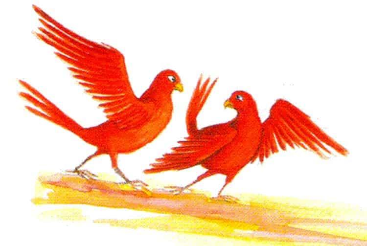 Oiseaux Kula ou Kura. Dessin Patrick Chastel