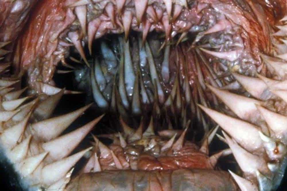 Intérieur de la bouche d'une tortue luth