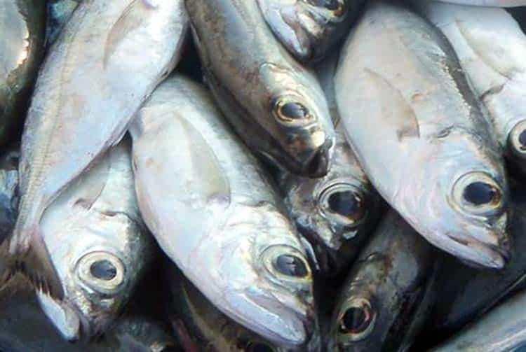 poissons ature