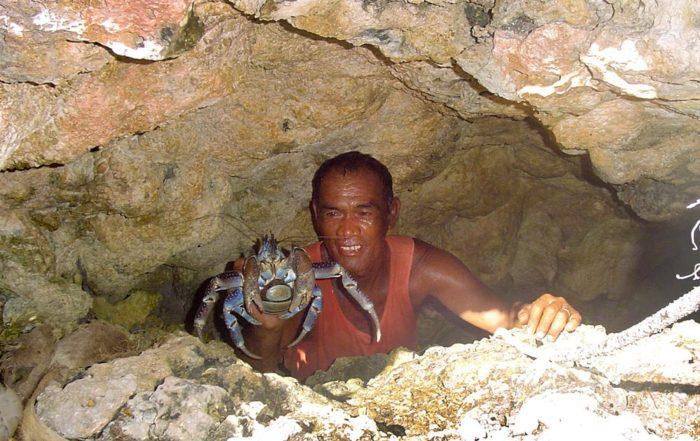 Crabe de cocotier, kaveu, dans une grotte à Tematahoa, Anaa.